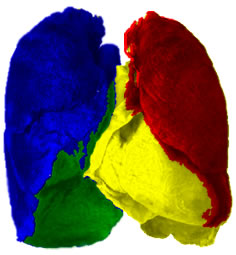 Il polmone di Matt Kazz